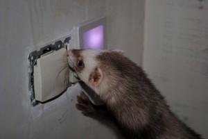 Непростая задача переустройства электрики