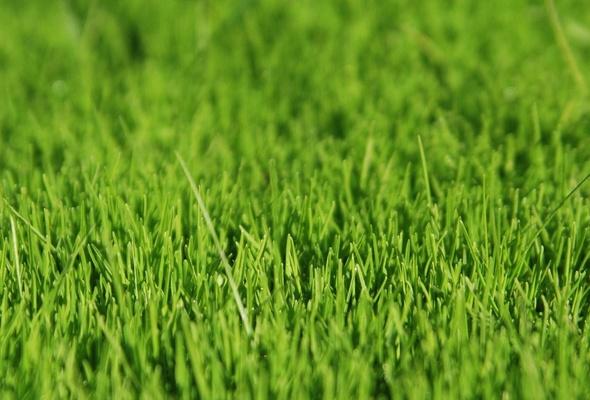 травы для очистки от паразитов