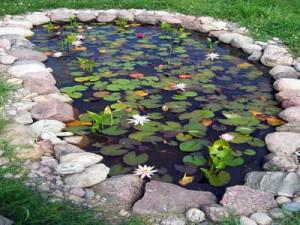 Decorative ponds to testify