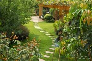 Landscaped garden plot2
