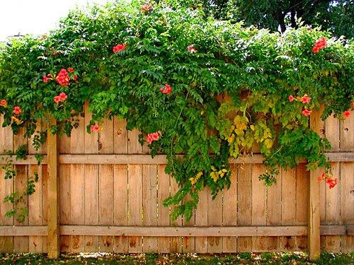 Liana Garden