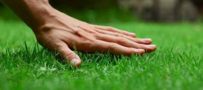 Perfectly smooth lawn