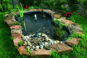 clean the pond by duckweed
