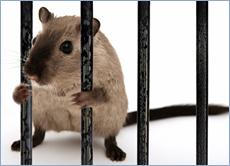 control mice