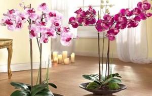 как ухаживать за домашними орхидеями