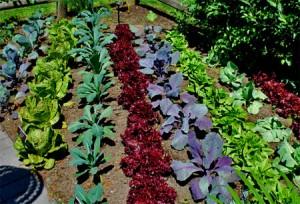 make the garden beautiful