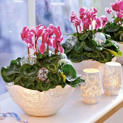 potted plants decorate the interior