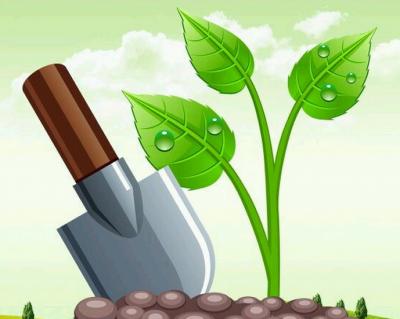 как сажать деревья на песке